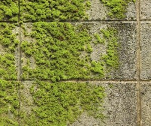 moss on the masonry