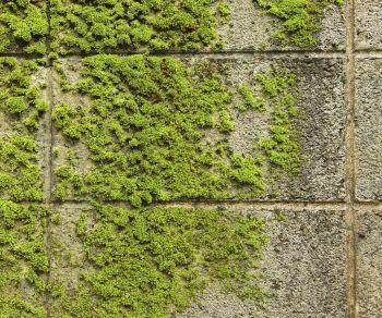 Rid Your Outdoor Bricks Of Moss